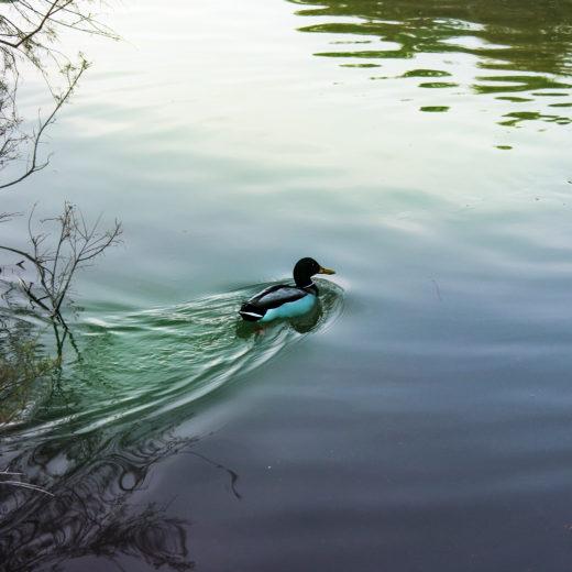 A floating bird