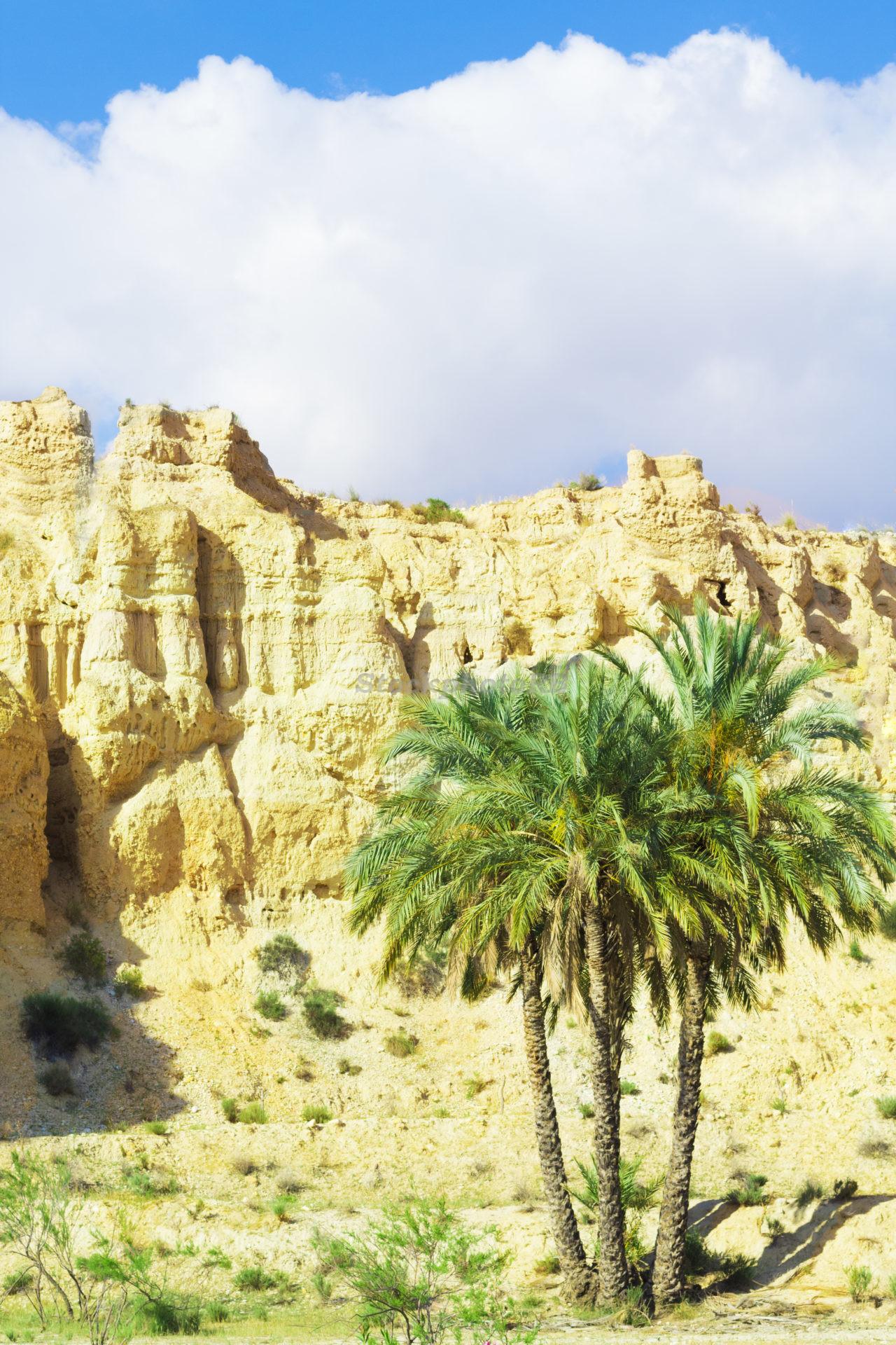 Palms and rocks