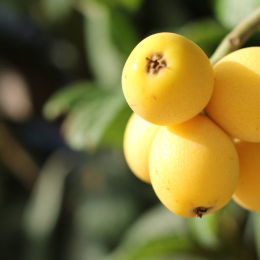 Yellow fruit
