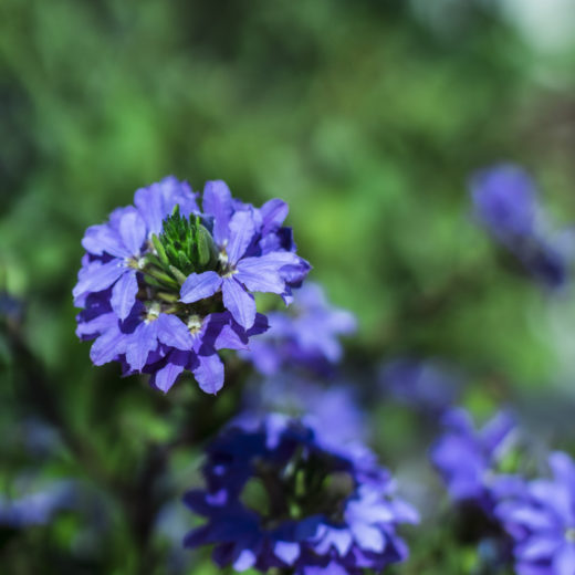 Blue flower on green background