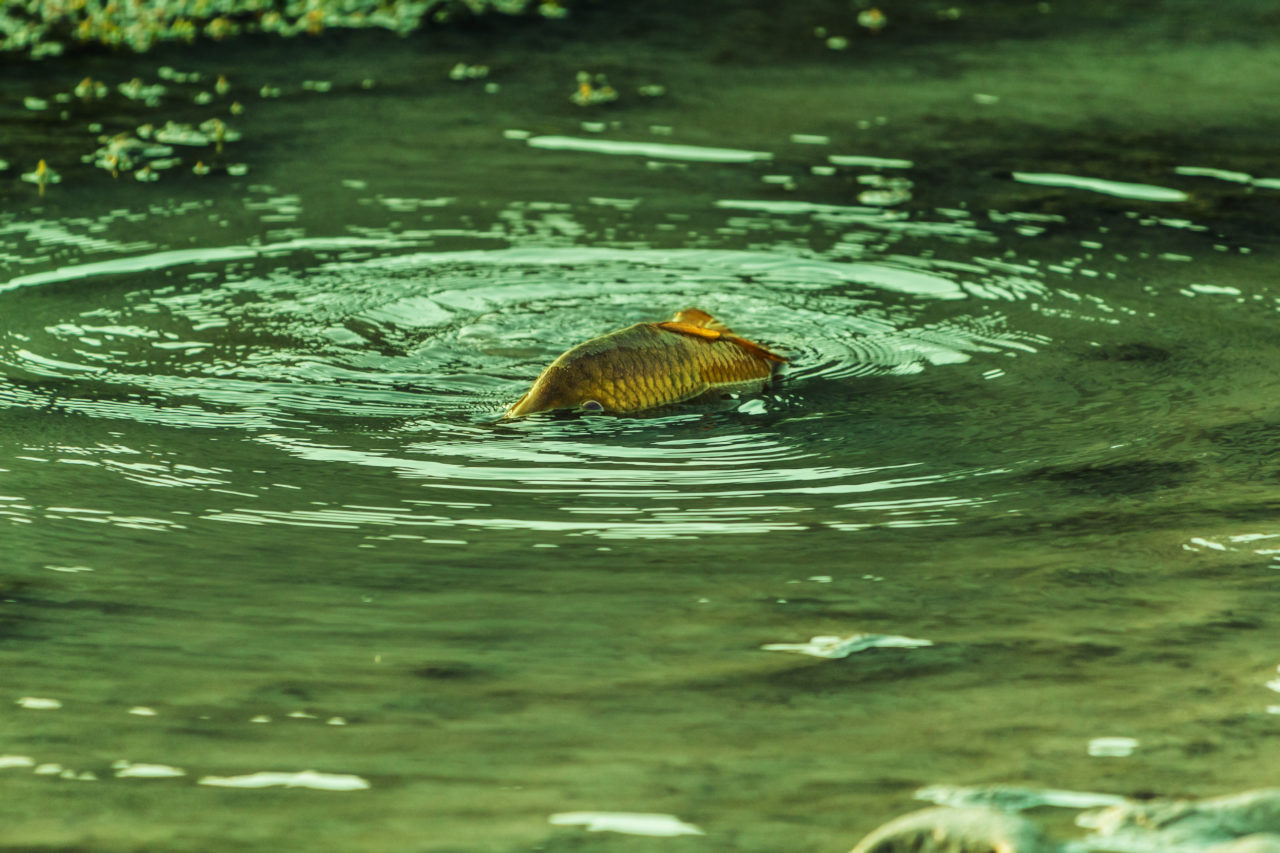 Fish on the shore-2