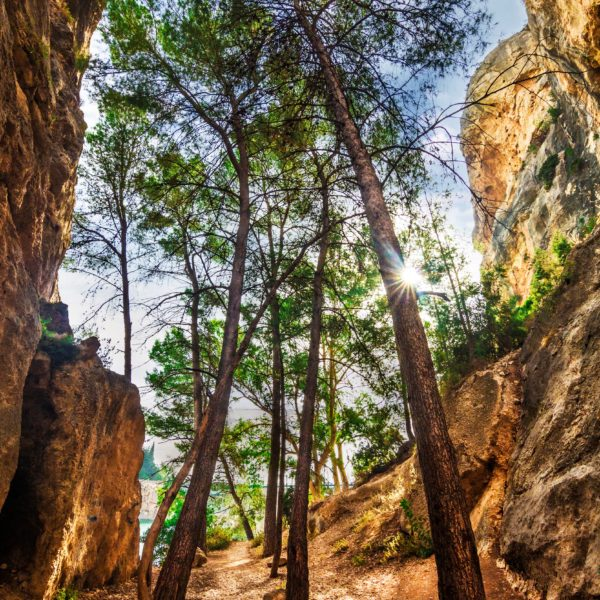 Trees in the rocks-13