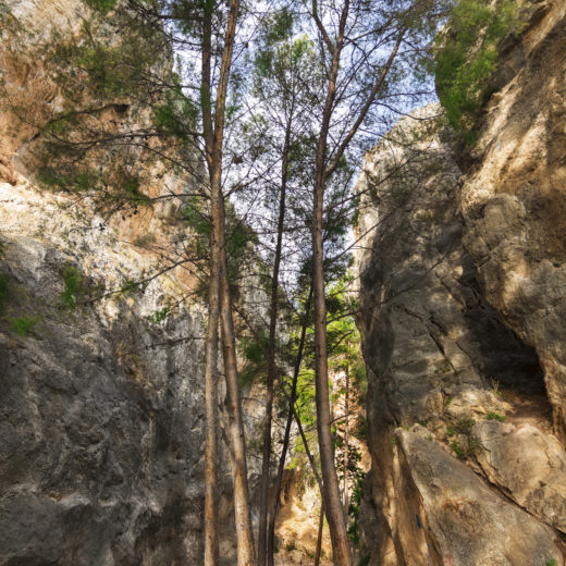 Trees in the rocks