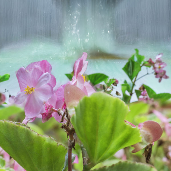 Water in the flowers