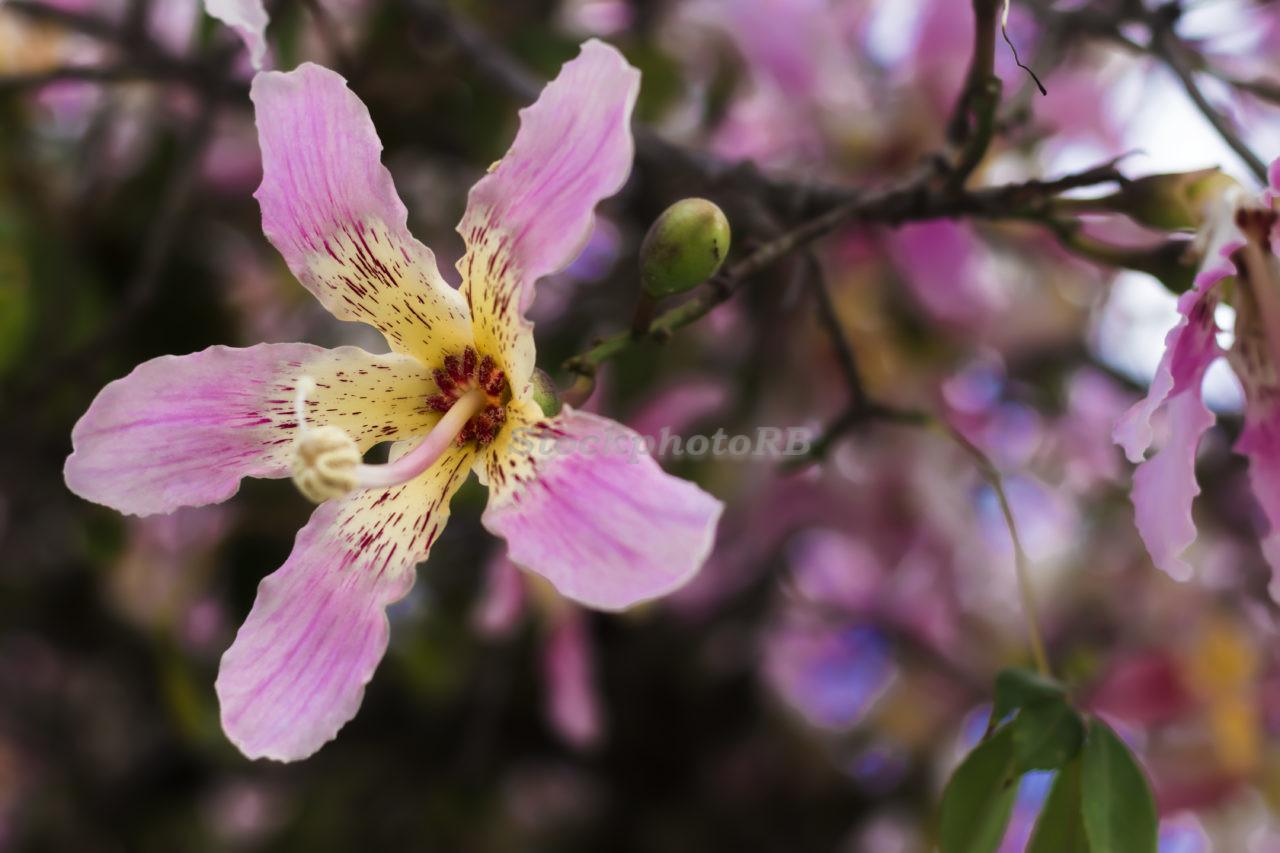 Purple flowers on a tree