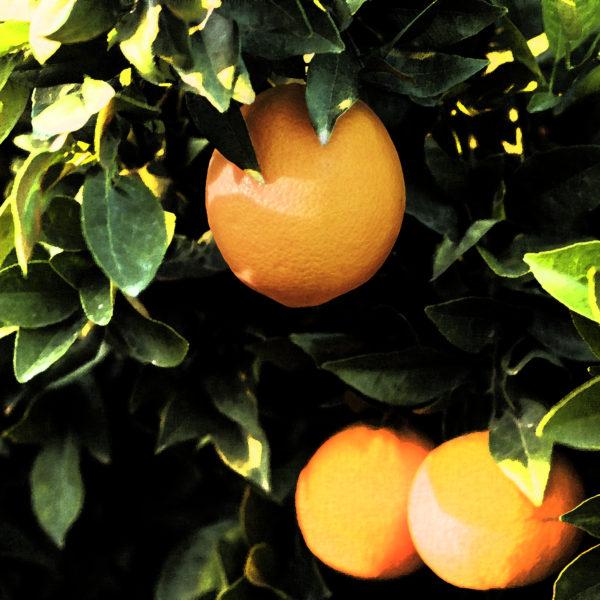Orange sunlit