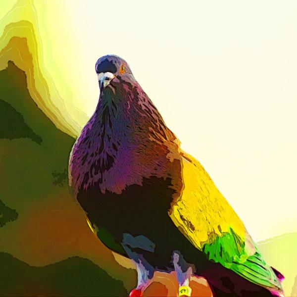 Dove portrait