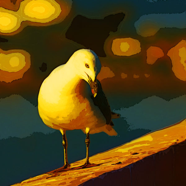 Portrait of seagull