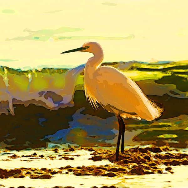 Bird on the shore