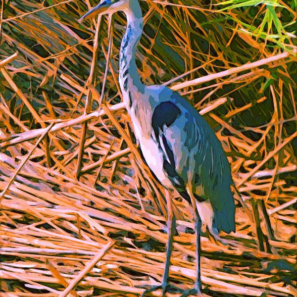 Bird in the reed