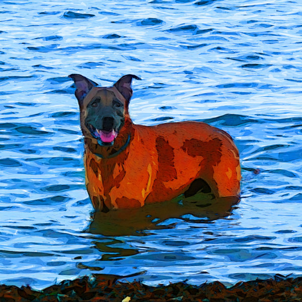 Dog at sea
