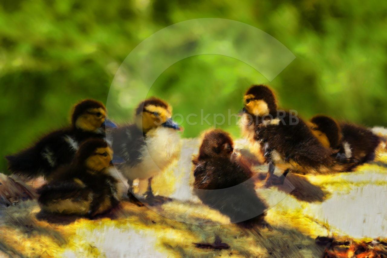 Six little ducklings