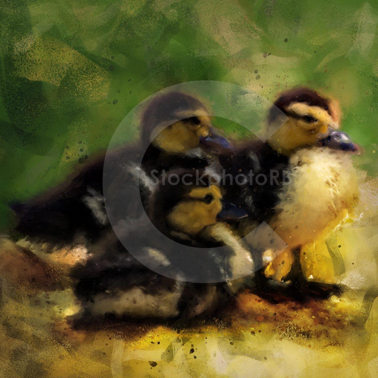 Three little ducklings
