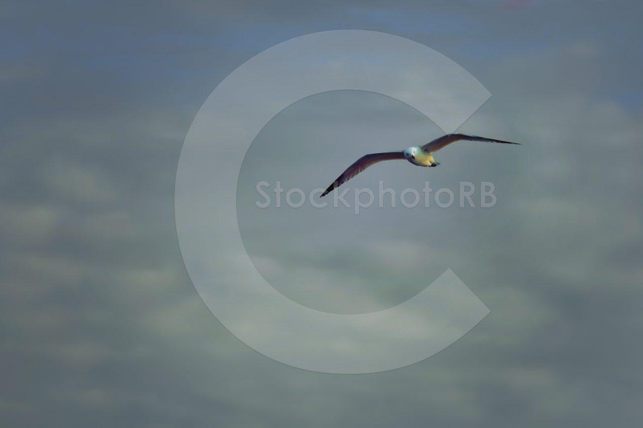 Birds over the sea